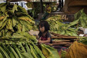 Eksploitasi Buruh Anak di Perkebunan Tembakau